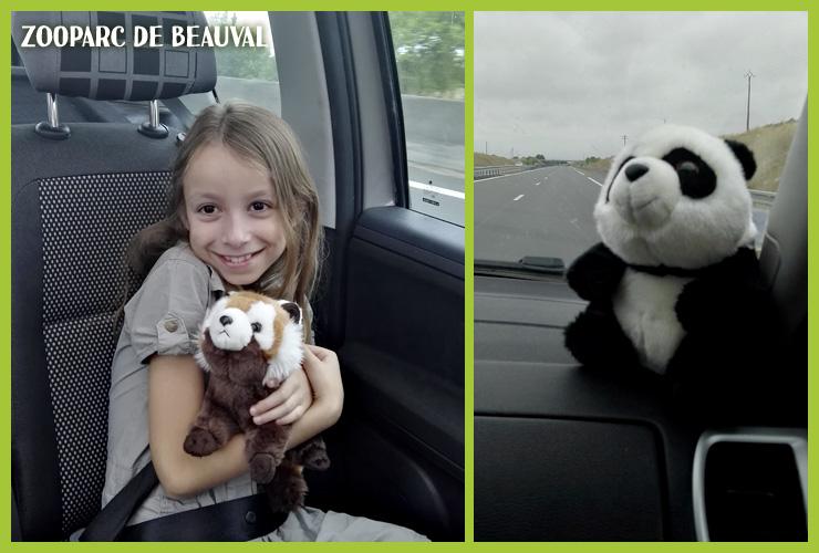 panda peluche